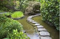 welche pflanzen klären den teich die wahl der richtigen teichpflanzen arten nutzen und