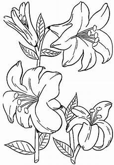 Ausmalbilder Pflanzen Blumen Blumen Malvorlage Malvorlagen Blumen Malvorlagen