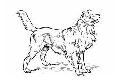 ausmalbilder hunde mischlinge malvorlagen hunde