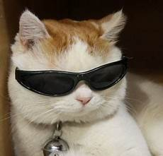 Katze Mit Sonnenbrille - cat sunglasses flickr photo