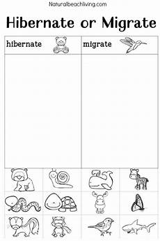 animal migration worksheets 14057 you ll these winter animals for preschool ideas animal activities for animals that