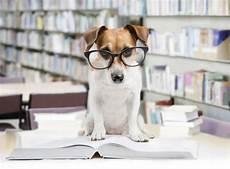 test ingresso veterinaria facolt 224 alternative a veterinaria test ingresso 2019