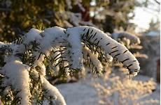 pflanzen im winter seidenspinner