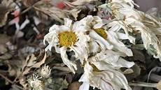 Vertrocknete Pflanzen Retten - wiederbelebung im sommer verdorrte pflanzen retten