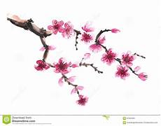 fleur de cerisier dessin branch of stock illustration