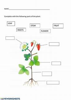 parts of the plant 1 grade worksheet