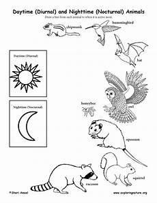 nocturnal animals worksheets 13983 daytime diurnal and nighttime nocturnal animals activity
