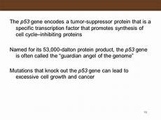 cell division worksheet with answers 6961 the p53 gene and cancer student worksheet answers briefencounters