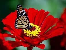 Inilah 12 Gambar Kupu Kupu Cantik Nan Rupawan Butterfly