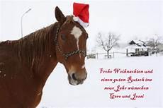 frohe weihnachten foto bild tiere haustiere