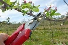 apfelbaum aus kern apfel aus kern ziehen 187 so wird ein baum daraus