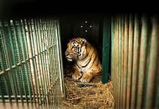 wildlife topics wildlife trade livekinder caigns caigns topics four paws uk