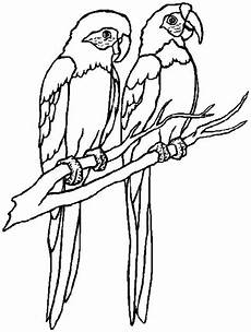 parrot coloring page print