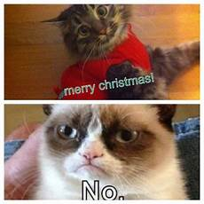 merry cat christmas meme pictures youareyoungdarling