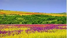 paesaggi fioriti 25 posti nel mondo diventano incredibili giardini