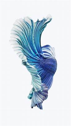 Iphone 6s Blue Wallpaper Background by Iphone 6s Fish Wallpapers 75 Images