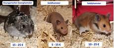 wie viel kostet ein hamster 220 berblick einmalige und