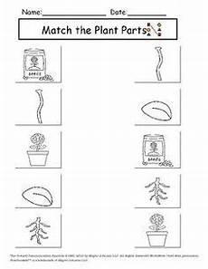 science plants worksheets for kindergarten 13582 image result for types of plants worksheets for kindergarten plants worksheets kindergarten