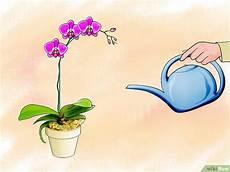 wie oft orchideen gießen orchideen pflegen wikihow