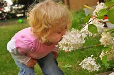 bambino sente l odore di il bambino un fiore sentente l odore fotografia stock