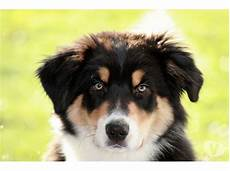 recherche chien a donner contre bon soin chien bonheur