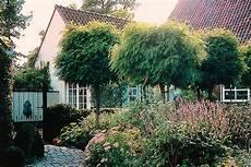 Die Schönsten Gartenbäume - kugelb 228 ume f 252 r den vorgarten gartentechnik de