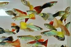 suche fische kleinanzeigen tiermarkt deine tierwelt de