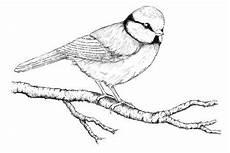 Malvorlagen Wings Wattpad Hawk Moth Ausmalbilder Kinder Ausmalbilder