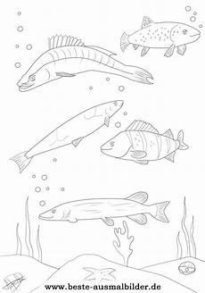 Ausmalbilder Fische Hecht Ausmalbilder Fische Hecht 1058 Malvorlage Fische