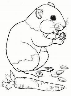 One Malvorlagen Zum Ausmalen Hamster Ausmalbilder Ausmalbilder Hamster Malvorlagen