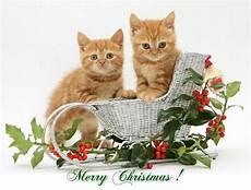 merry christmas kittens world pinterest