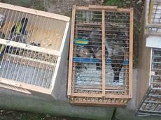 riproduzione cardellini in gabbia le guardie eco zoofile di napoli sequestrano e liberano