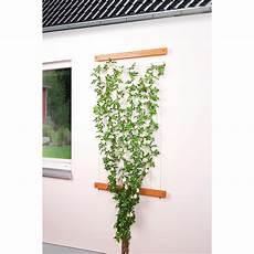 Rankhilfen Für Kletterpflanzen - seilrankhilfe rankhilfe f 252 r kletterpflanzen 12 50
