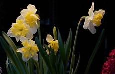viridea vasi spendi bene magazine bulbi in giardino e in vaso in