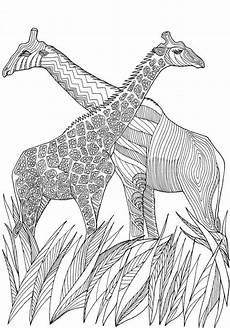 giraffes amazing animals colouring pages by joenay inspirations