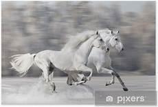 Ausmalbilder Pferde Im Winter Poster Zwei Wei 223 E Pferde Laufen Im Winter Galopp Pixers