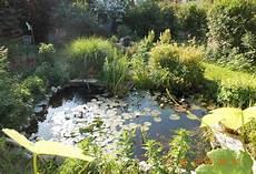 Wasseroase Im Garten Alles Rund Um Die Teich Gestaltung