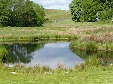 natural ponds article 1a creating a large natural pond