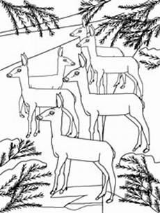 ausmalbilder tiere im winter ausmalbilder tiere im winter basteln gestalten