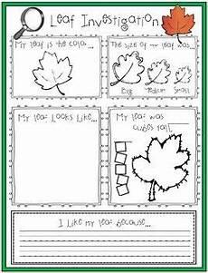 science worksheets leaves 12281 leaf investigation writing center kindergarten tree study preschool projects