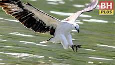 Pemburu Gambar Burung