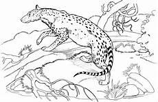 gepard am schleichen ausmalbild malvorlage tiere