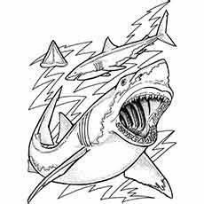 haie ausmalbilder ausmalbilder ausmalbilder tiere