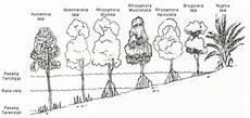 Profil Ekosistem Mangrove Bakau Geograph88