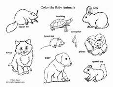coloring pages of baby animals and 17527 baby animal labeled coloring page