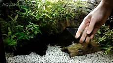 aquarienscheiben reinigen
