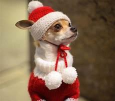 animals celebrate christmas photos festive animals ny daily news