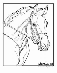 animal jr coloring page