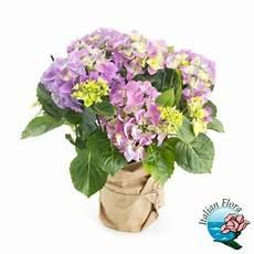 fiori per chiedere scusa spedisci a domicilio i migliori fiori per chiedere scusa