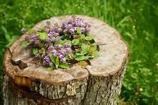 Baumstumpf Im Garten Verschönern - baumwurzel fr 228 sen 187 darauf sollten sie achten